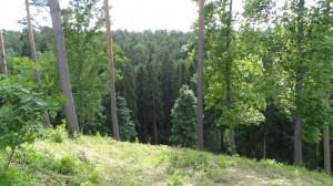 image 13 large